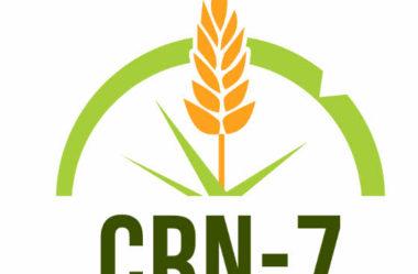 Como tirar segunda via CRN-7